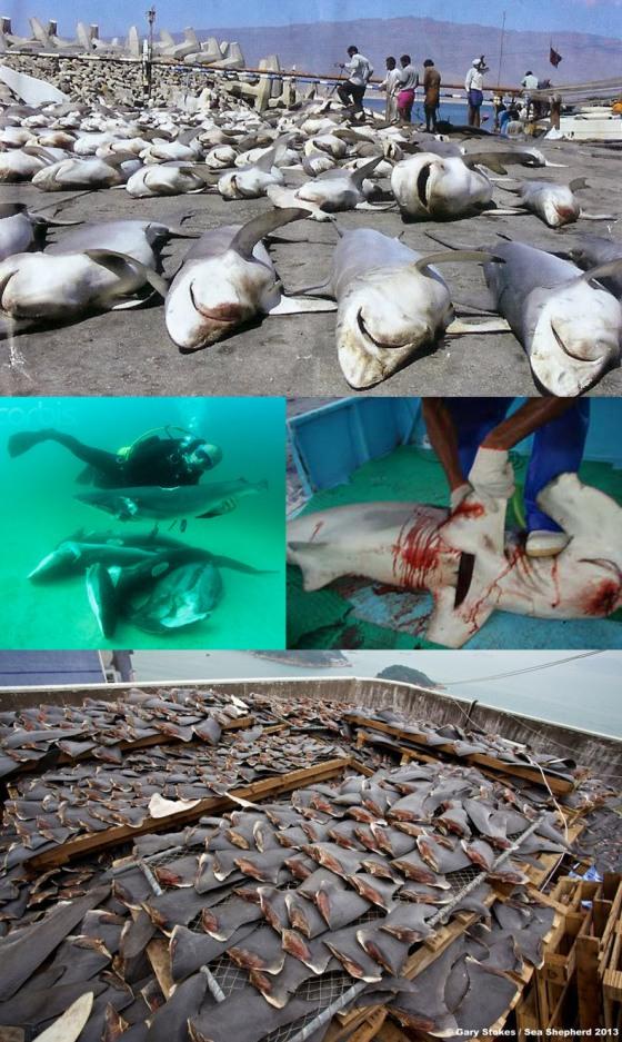 Shark Brutality